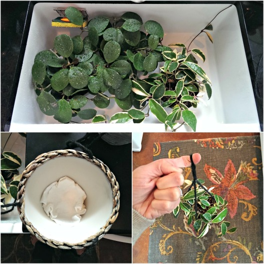 hanging-baskets-diy-plants-sparrowsoirees